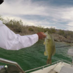 Lake Mohave Smallmouth Bass Fishing April 10, 2019