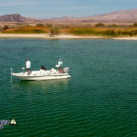 Bass-Fishing-Near-Cottonwood-Cove